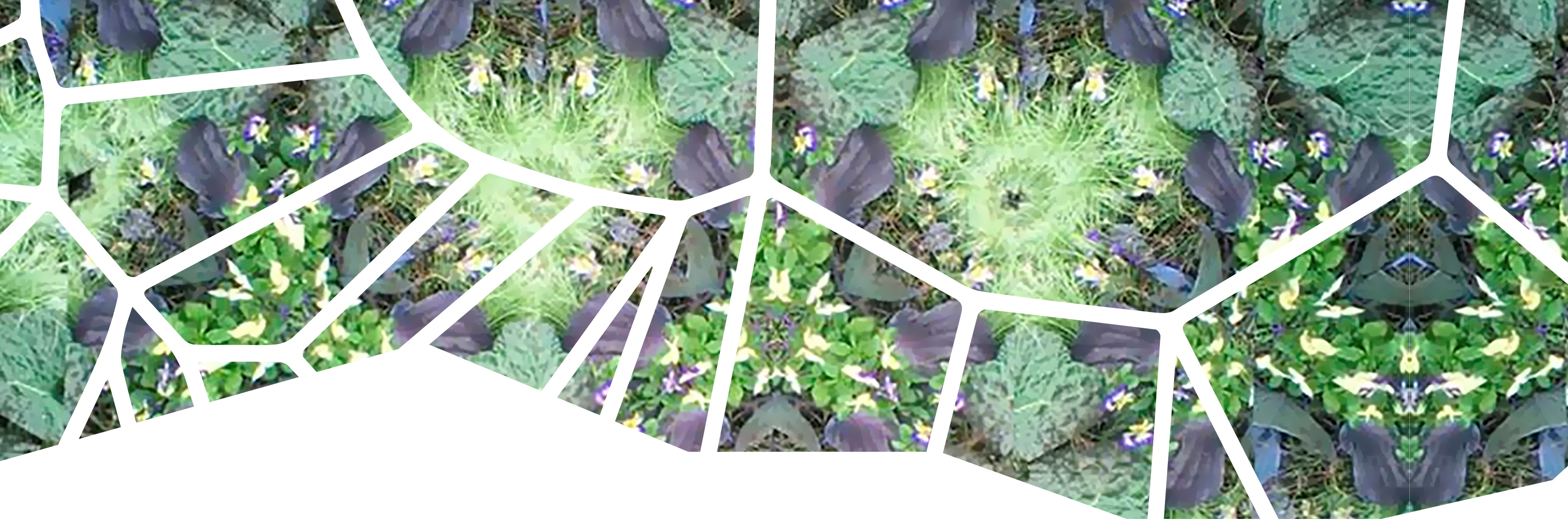 Garden Kaleidoscope At Olbrich >> Look Tropical Tessellations