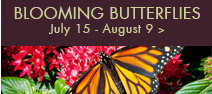 Blooming butterflies for Olbrich botanical gardens hours